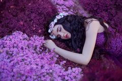 Uns sonos delicados e graciosos da menina em um campo de flor roxo mágico, em uma beleza de sonho com cabelo escuro longo e em um foto de stock