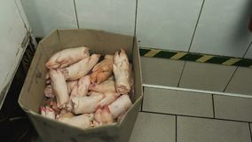Severed pork hooves legs are in kitchen restaurant in a carton box, unsanitary or incorrect conditions. Bad or poor. Unsanitary conditions, bad or poor storage stock video