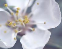 Unschärfe-Blumen auf einem Frühlingstagesmakro Lizenzfreies Stockfoto