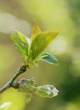 Unschärfe-Blumen an einem Frühlingstag Lizenzfreies Stockbild
