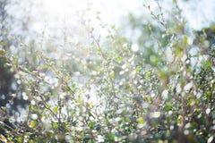 Unschärfe bokeh Grünblatt mit Sonnenaufflackernhintergrund Stockfoto