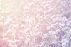 Unschärfe der Grasblume mit Pastell- Farbe-eณ fect Naturhintergrund Stockfotografie