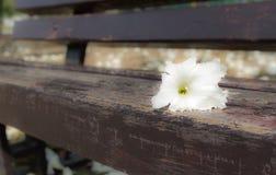 Unschärfe der weißen Blume Stockbilder