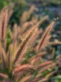 Unschärfe des Gras-Blumen-Feldes Lizenzfreie Stockfotos