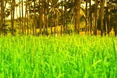 Unschärfe des Hintergrundes des grünen Grases und des Baums Stockfotos