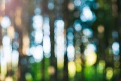 Unschärfe-grüner Wald lizenzfreie stockbilder