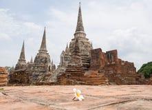 Unschärfe Plumeria-Vordergrund-historischer Tempel in der Welterbstadt, Ayuddhaya Lizenzfreie Stockbilder