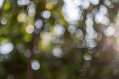 Unschärfebild von abstraktem Bokeh des Baumhintergrundes zurückhaltend und der Sonne F Stockfoto