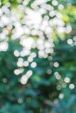 Unschärfeeffekt des grünen Blatthintergrundes Stockfotos