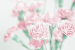 Unschärfehintergrund: Schöne rosa Blume mit Platz für Text Stockbild