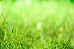 Unschärfenhintergrund des grünen Grases Lizenzfreies Stockfoto