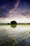 Unscharfe alte Hütte des Hintergrundes in den mittleren Reisfeldern weiche und drastische dunkle Wolken Reflexion auf dem Wasser  Stockfotos