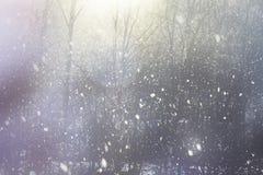 Unscharfe Bäume und es sind schneebedeckt lizenzfreie stockbilder