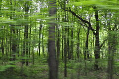 Unscharfe Baum-Ansicht vom Auto Stockfotos