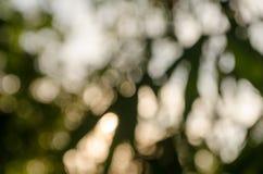 Unscharfe Bilder werden als Hintergrund verwendet lizenzfreie stockfotografie