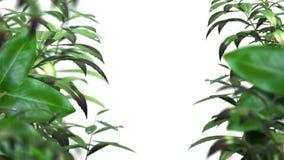 Unscharfe Blätter mit Wasser lässt lebhaften Hintergrund fallen lizenzfreie abbildung