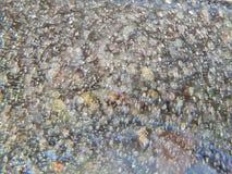 Unscharfe Blasen im Süßwasser, abstraktes Muster stockfotografie