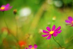Unscharfe Blume auf grünem Hintergrund Stockbilder