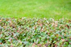 Unscharfe grüne Blattwand und frisches Frühlingsgras für Anzeigenmontagen stockfoto
