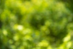 Unscharfe grüne Hintergrundnatur Lizenzfreies Stockfoto