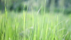 Unscharfe Gras-Hintergrundnahaufnahme nave kümmern Sie sich um einem kleinen Baum stock footage