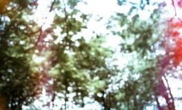 Unscharfe Gruppe des Baums im Park, Weinlese filterte, Natur backgroun Stockbilder