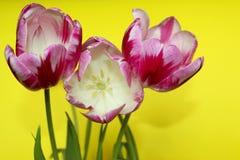 Unscharfe rote Blumen auf gelbem Hintergrund Stockbild