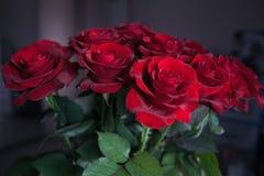 Unscharfe rote Rosen auf lokalisiertem Hintergrund stockfotografie