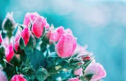 Unscharfer Blumenhintergrund von Rosen und von blauem bokeh Lizenzfreie Stockbilder