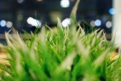 Unscharfer grüner Hintergrund des Grases und der Anlagen mit bokeh Effekt stockfotografie