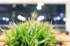 Unscharfer grüner Hintergrund des Grases und der Anlagen mit bokeh Effekt lizenzfreies stockbild