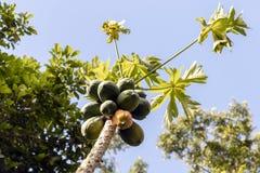 Unscharfer grüner Hintergrund mit Beeren und Früchten des Regenwaldes, Dschungel von der Amazonas-Becken in Südamerika stockbild