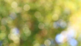 Unscharfer grüner Natur bokeh Zusammenfassungshintergrund stock footage
