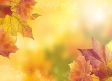 Unscharfer heller Herbsthintergrund Abstraktes buntes bokeh Stockbild