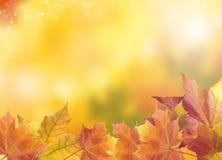 Unscharfer heller Herbsthintergrund Abstraktes buntes bokeh Stockfotografie