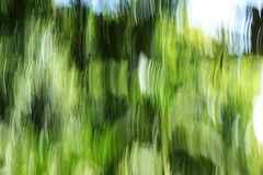Unscharfer heller Wald - Hintergrundschönheit Stockfotos