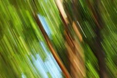 Unscharfer heller Wald - Hintergrundschönheit Stockfoto