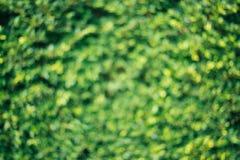 Unscharfer Hintergrund der Natur Grün stockfoto