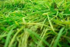 Unscharfer Hintergrund des grünen Grases Stockbilder