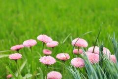 Unscharfer Hintergrund, grün mit kleinen rosa Blumen Stockfotografie