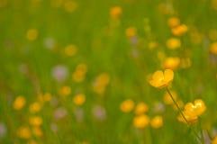 Unscharfer Hintergrund mit gelben Blumen Stockfotos