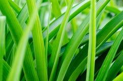 Unscharfer Hintergrund mit grünem Gras Lizenzfreies Stockfoto
