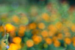 Unscharfer Hintergrund mit orange Blumen in der Wiese Stockfotografie