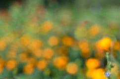 Unscharfer Hintergrund mit orange Blumen in der Wiese Lizenzfreies Stockbild