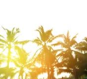 Unscharfer Hintergrund, Sonnenaufgang am Kokosnussbaum Stockbilder