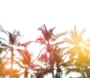 Unscharfer Hintergrund, Sonnenaufgang am Kokosnussbaum Stockbild