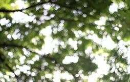 Unscharfer Naturbaumwald unter hellem Hintergrund des Sonnenlichts, Natur abstraktes bokeh weiche grüne Hintergrundanlage, Sommer Stockfotos