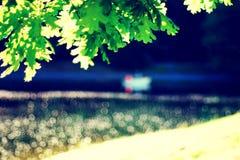 Unscharfer Parkteich mit Boot, Flecke des hellen, grünen Eichenlaubs lizenzfreie stockfotos
