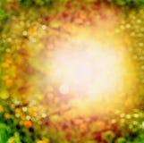 Unscharfer Sommer- oder Herbstnaturhintergrund mit Blumen, Anlage des Sonnenuntergangs Lizenzfreies Stockfoto