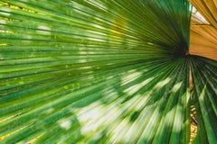 Unscharfes abstraktes des großen Palmblattes und des Sonnenlichts stockfotografie